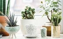 Tips para cuidar tus plantas de interiores